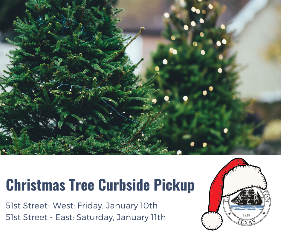 Christmas Tree Curbside Pickup